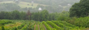 Acres of organic vineyards cover the rolling hills of Virginia.